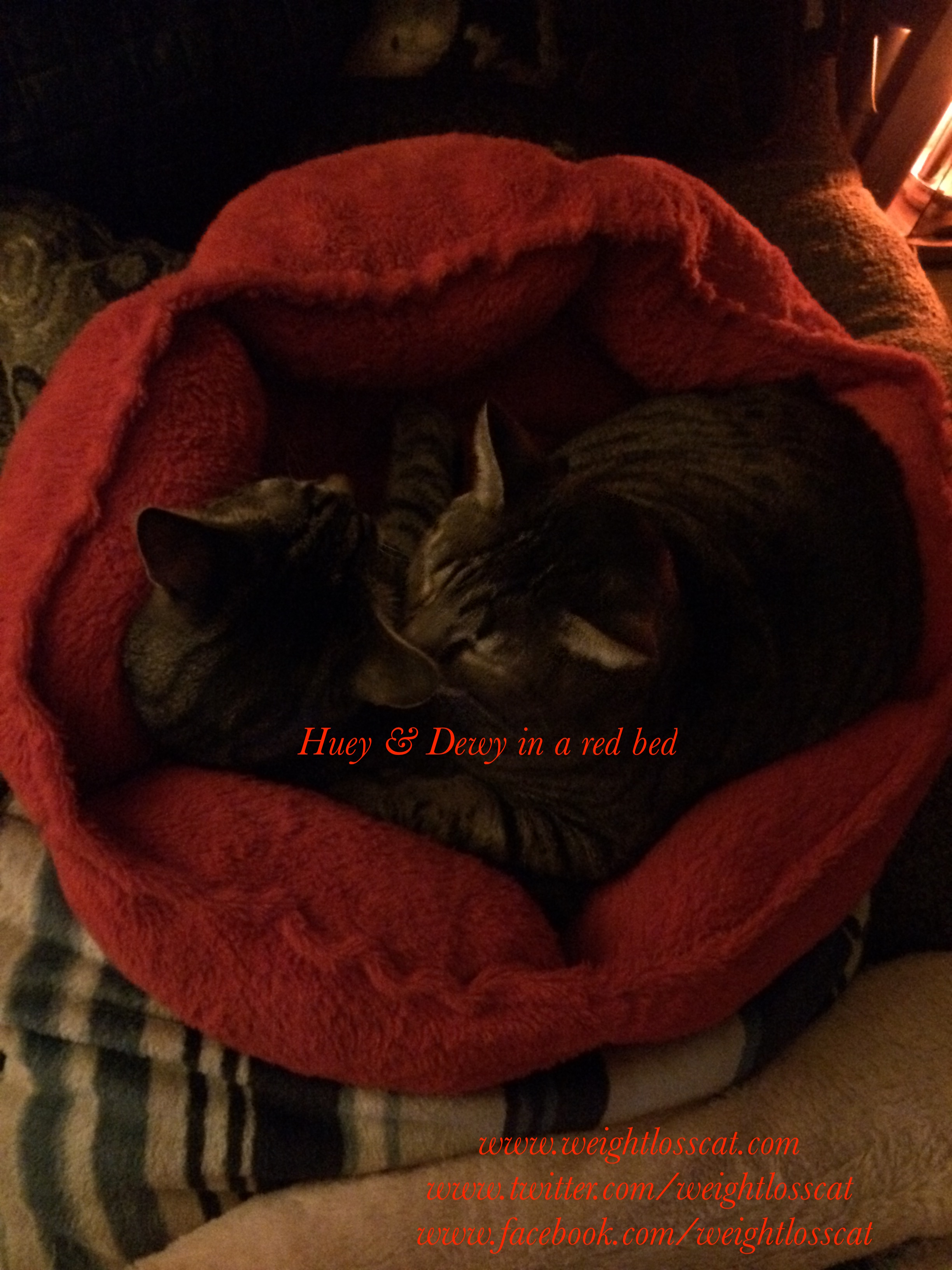 Huey and Dewey in the red bed